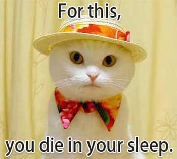 Dressed up killer kitteh