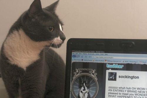 Sockington and his twitterdom