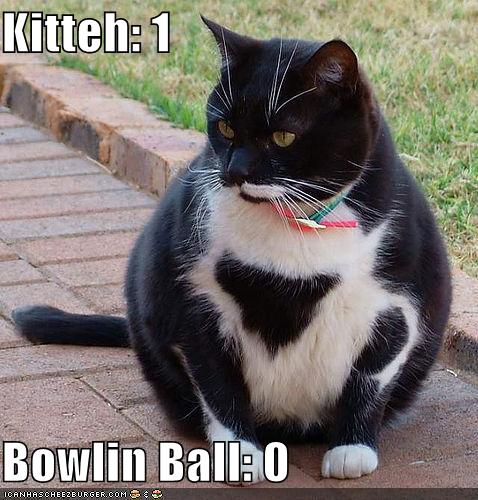 Bowling_ball_kitteh