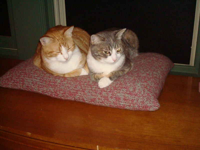 Miles and Lizzie on cat bed