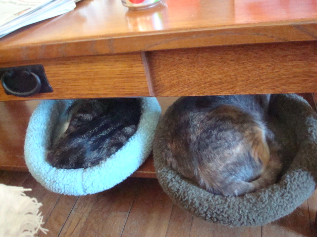 Two tabbies in their pods