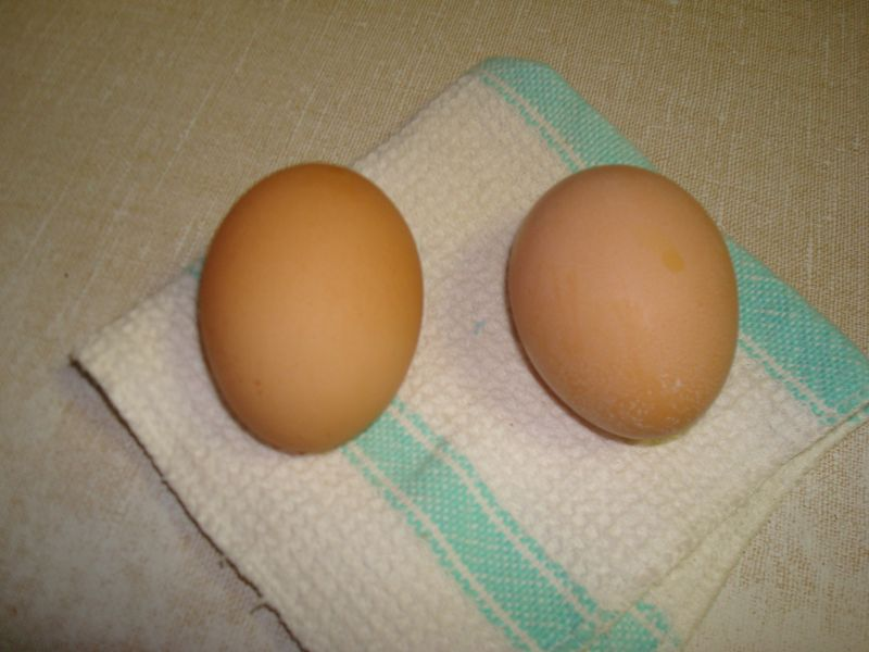 2012 first two egg day