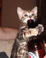 Drinking_kitty