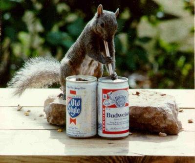 Drinking_squirrel