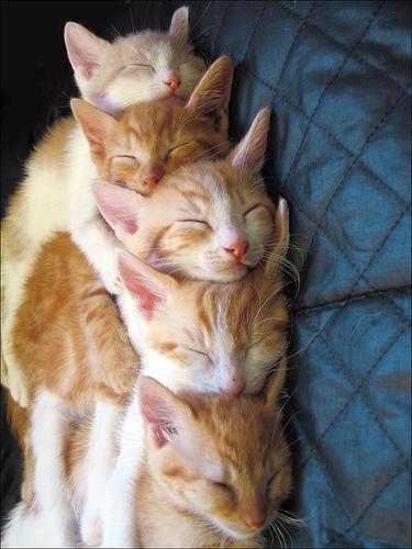 Cat_stack