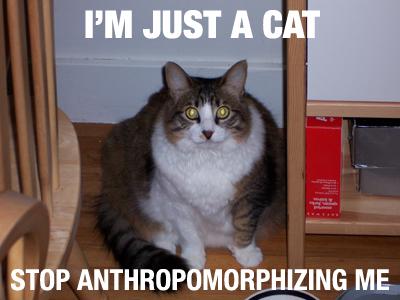Just_a_cat