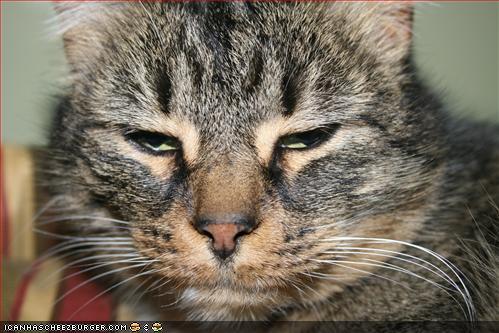 Grumpy_kitteh